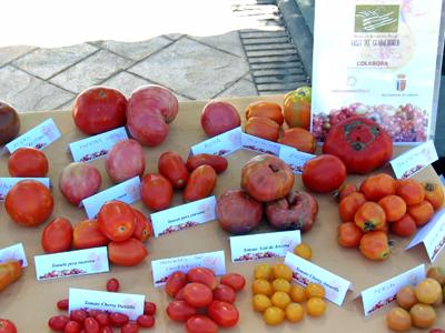 tomates guadalhorce