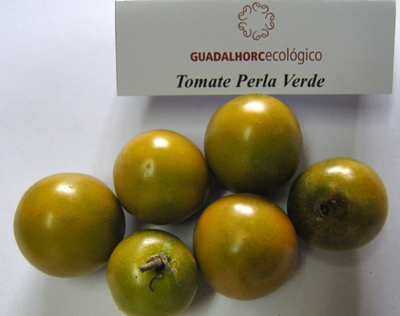 tomate guadalhorce